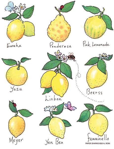 Flour Sack Towel - Lemons
