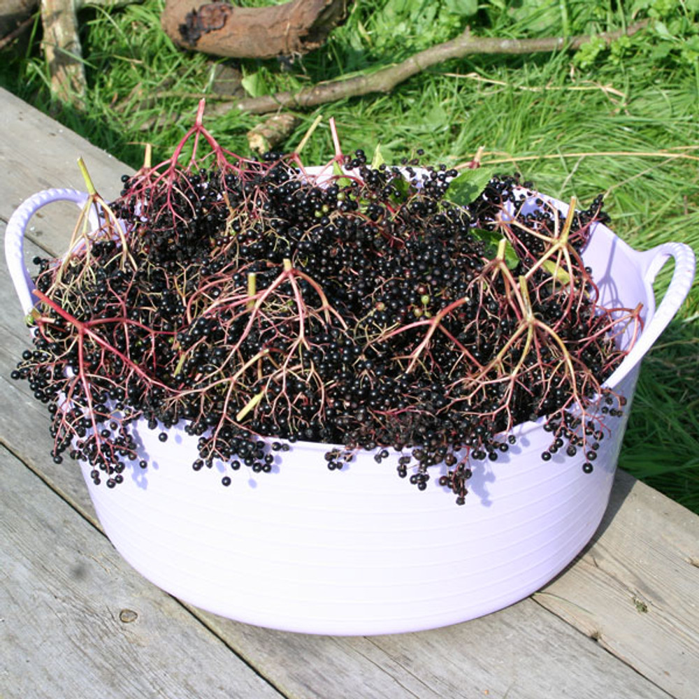 Extra Small Shallow Tubtrugs are great for storing and collecting fruit.