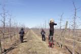 Pruning the Orchard: Part One of a Three Part Series
