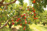 Pruning the Orchard: Part Three of a Three Part Series