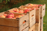 Reducing Food Waste is Good For Everyone