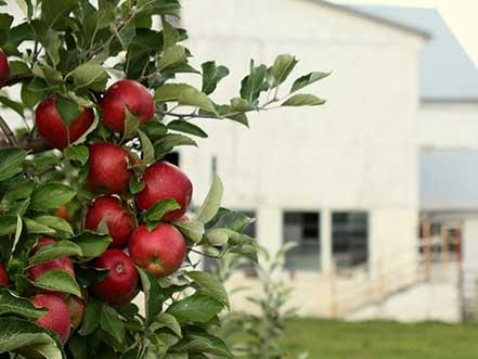 Amish bulk foods