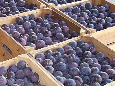 Nutrient-rich produce