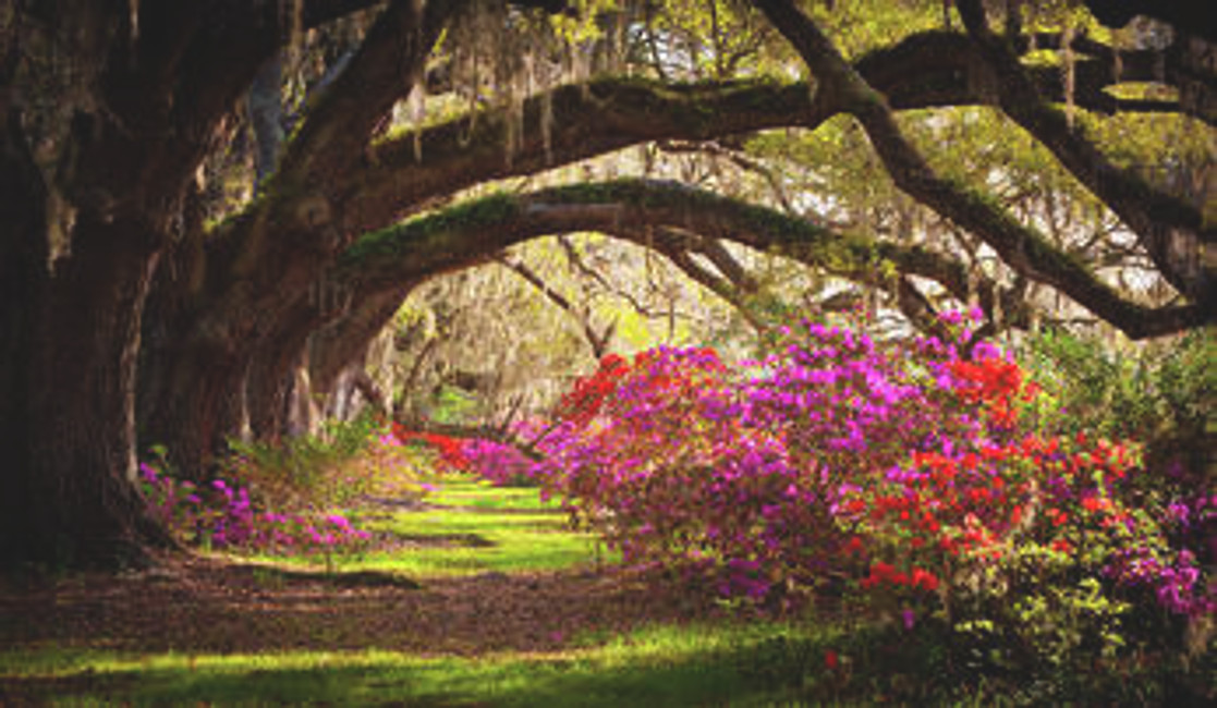 Our Favorite Places to Propose in South Carolina
