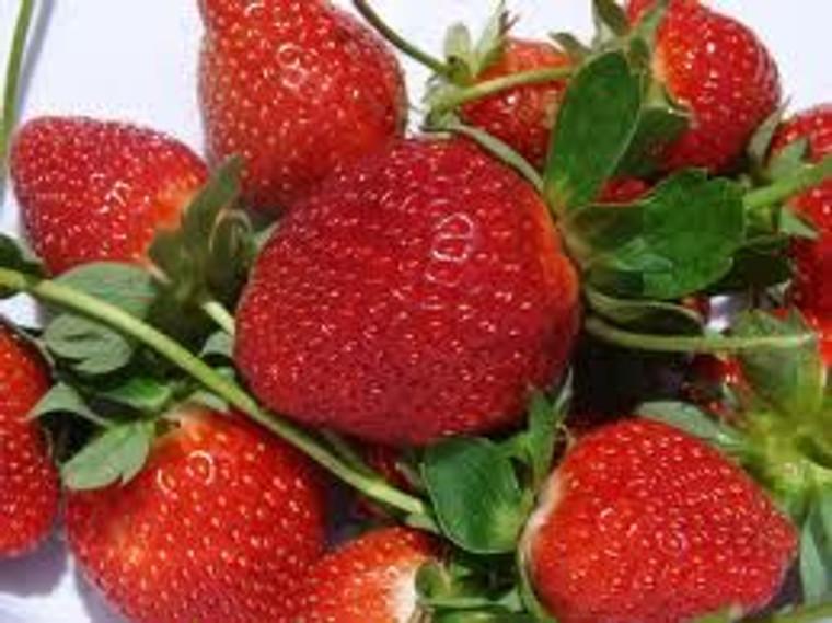 Strawberry 'Camarosa' 4 Pack 10cm