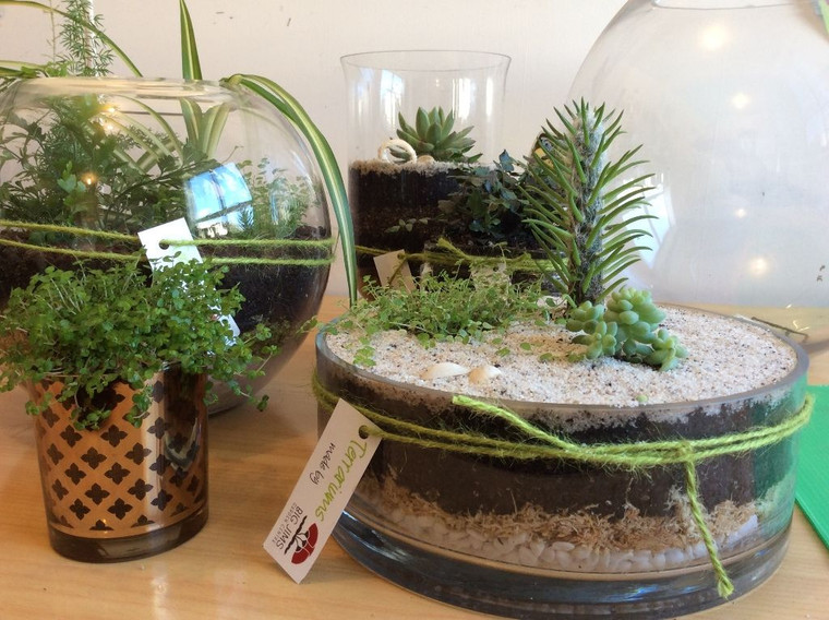 Planted Glassware $ 49.99
