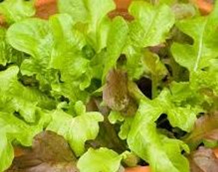 Planted Bowl Salad Vege