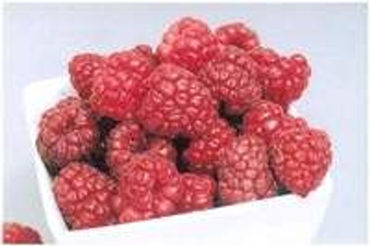 Raspberry 'Aspiring' 3L (92238) 3L