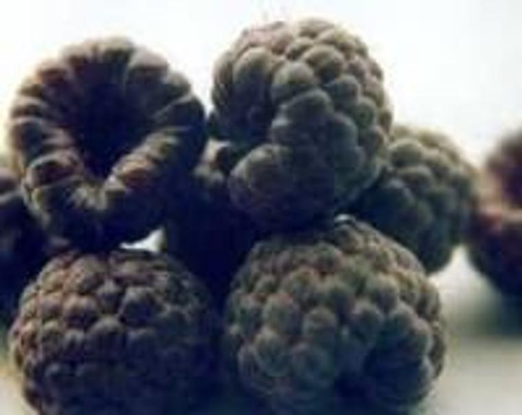 Raspberry 'Ebony' 3L (92242) 3L