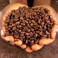 roasted-aribica-beans-sm.jpg