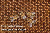 Fun Facts Friday - Hexagons in Nature