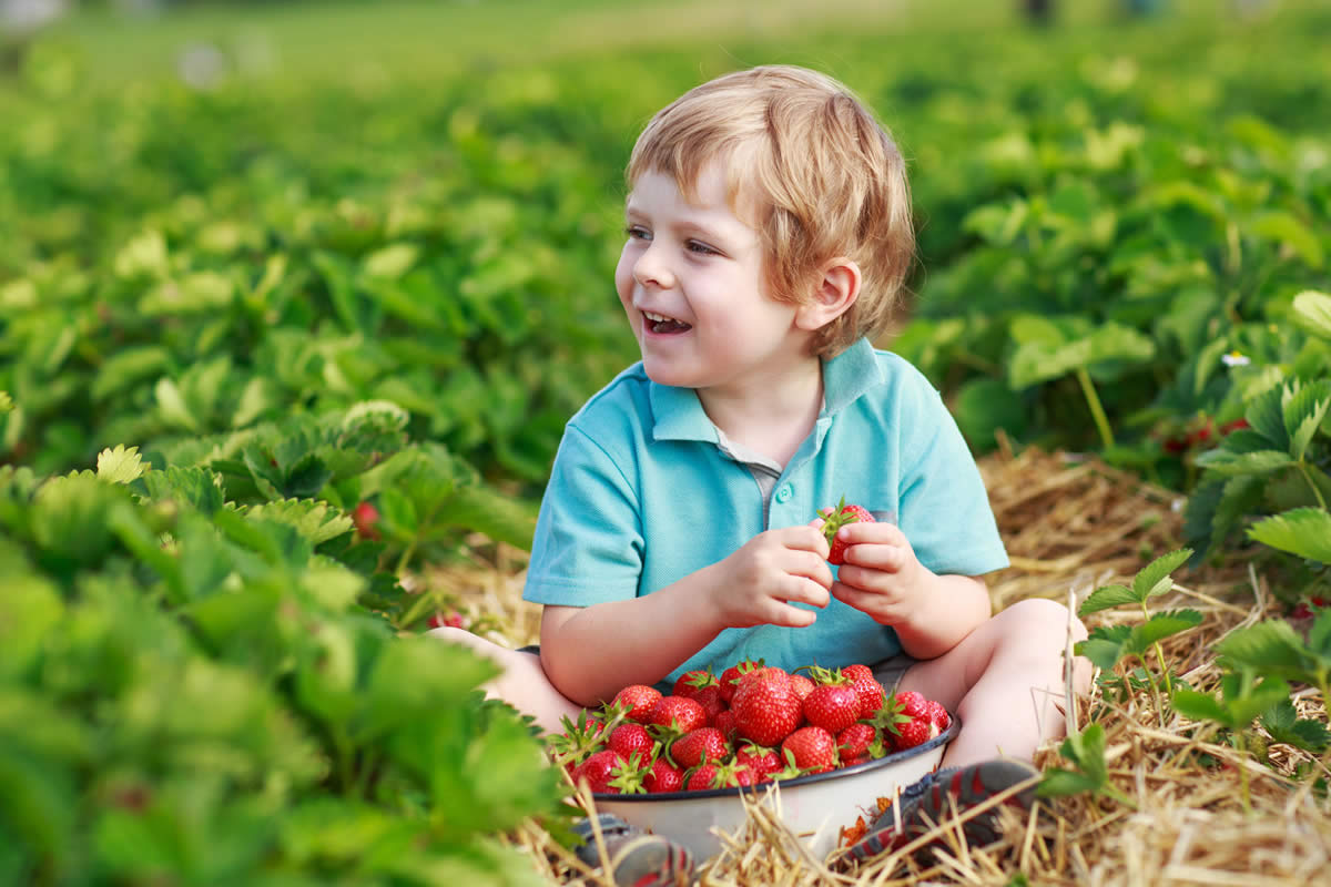 boy-strawberry-picking.jpg