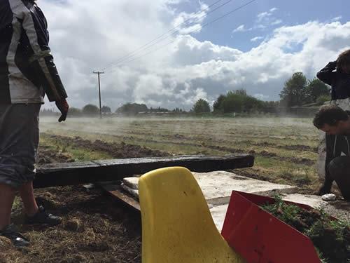 planting-carshalton-lavender.jpg