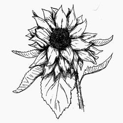 Sunflower oil properties