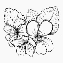 violet_leaf.jpg