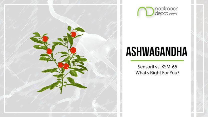 Which is the Best Ashwagandha? | Sensoril vs  KSM-66