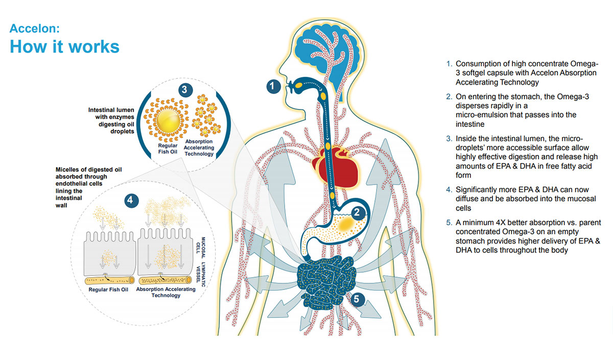 How Accelone Omega 3 Fish Oil Works