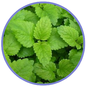Lemon Balm For Sleep Support