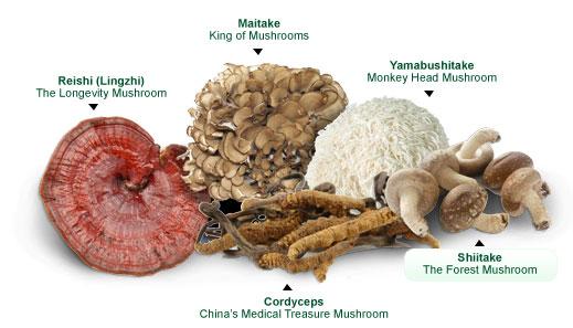 medicinal-mushrooms.jpg