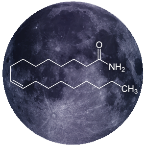 oleamide-sleep-support-1.png