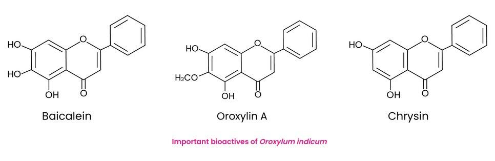 Important bioactives of Oroxylum indicum