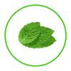 1 Litre - Natural Fresh Mint Flavour