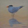 Coastal Bird Series IX