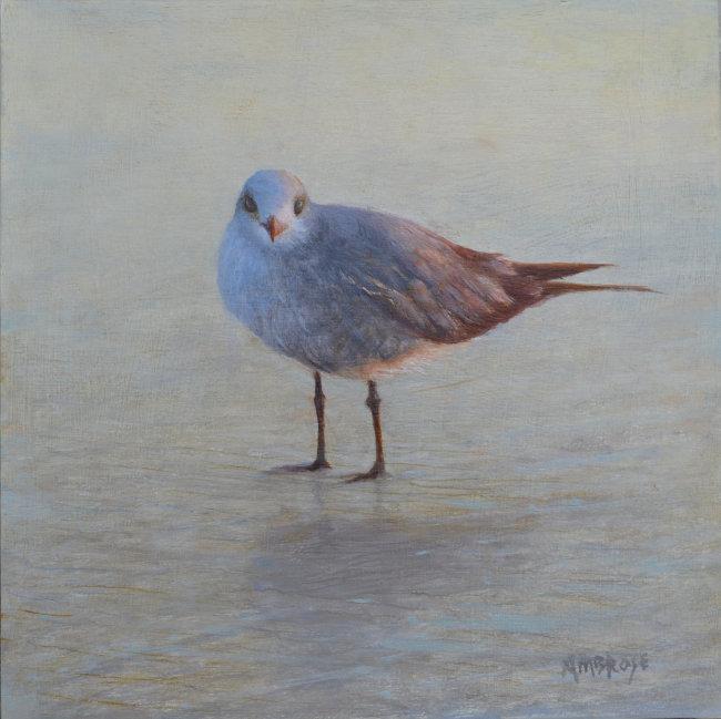 Coastal Bird Series at Cheryl Newby Gallery