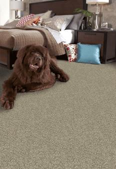Phenix Canal Street Nylon Carpet