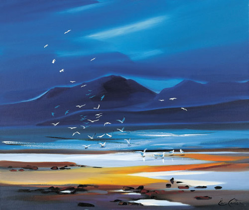 Flock of Gulls, Arran by Pam Carter