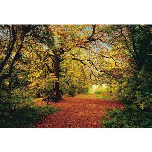 12 Feet 9 Inches x 8 Feet 10 Inches Autumn Forest Wall Mural