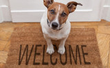 10 Dog Walking Tips Everyone Should Know