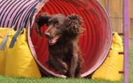 Keeping Your Dog Happy During the Coronavirus Quarantine