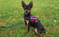 Weekly Paws: Marie Donahue & Pyxis