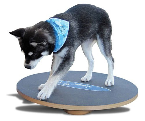 FitPAWS Large Wobble Board