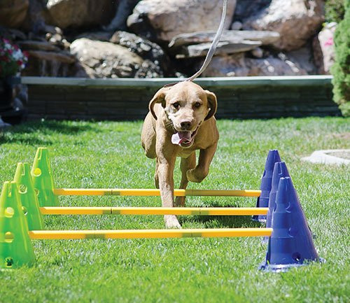 FitPAWS Canine Gym Dog Agility Set