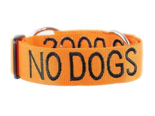 Friendly Dog Awareness Collar