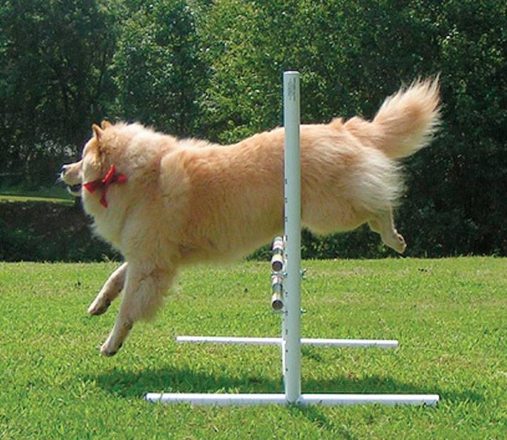 dog jumping obedience jump