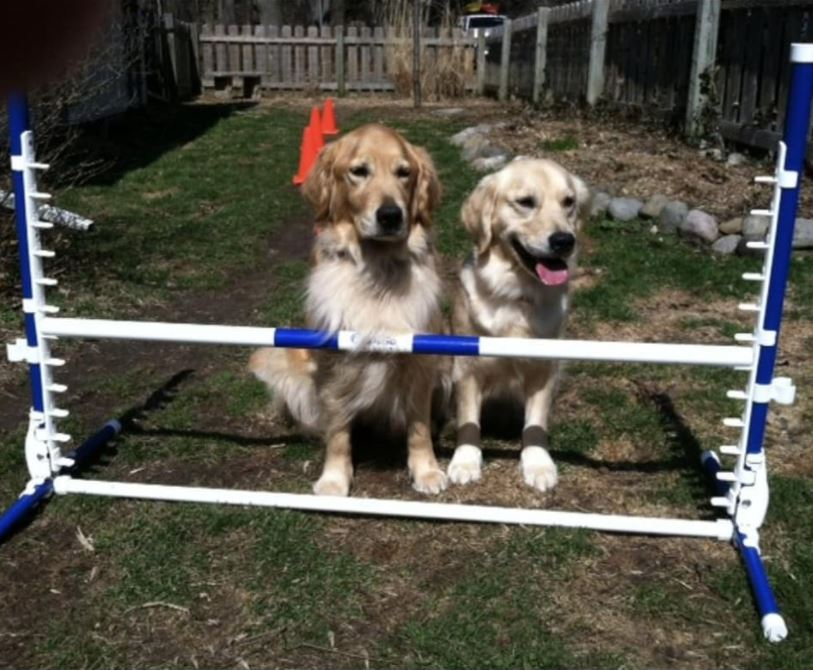 2 dogs sitting by Clip and Go jump