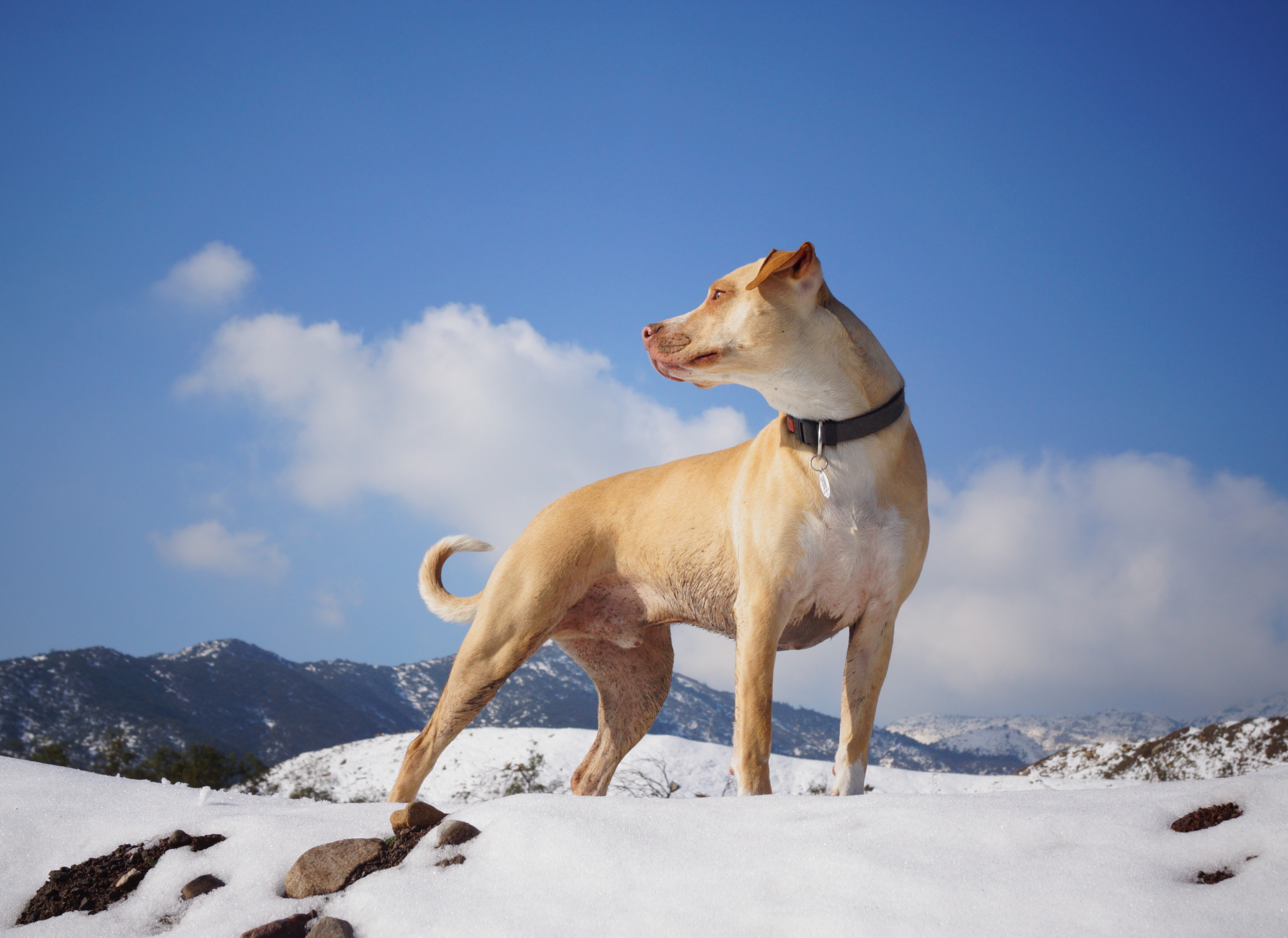 dog standing on mountain