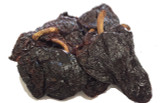 Dried Ancho Grande Chilli Image, Chillies on the Web