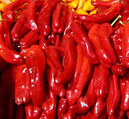 Rokita Chilli Seeds Image by CHILIESontheWEB