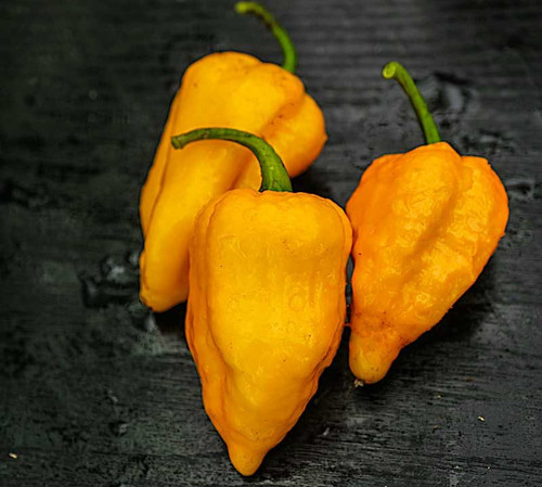 Bhutlah Yellow Hybrid Chilli Seeds Image by CHILLIESontheWEB