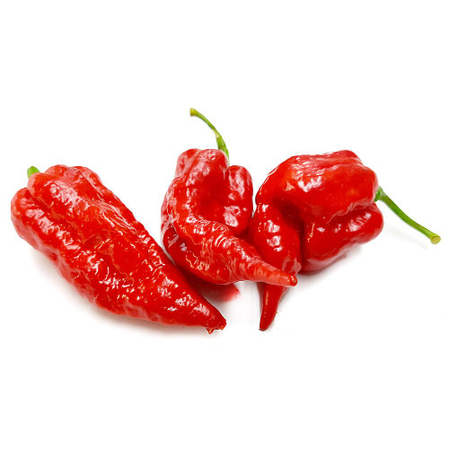 Naga Brains Red Hybrid Chilli Seeds Image by CHILLIESontheWEB