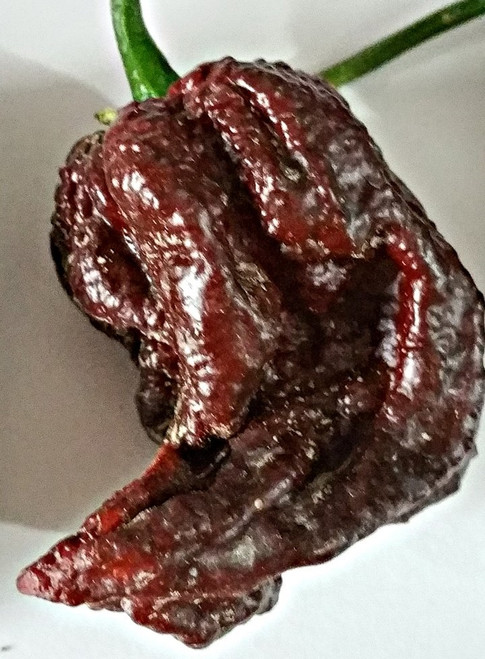 Concord Naga Hybrid Chilli Seeds Image by CHILLIESontheWEB