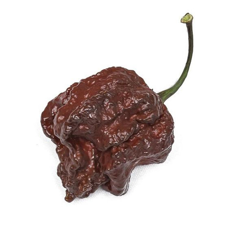 Chocolate Moruga Brains Hybrid Chilli Image by CHILLIESontheWEB