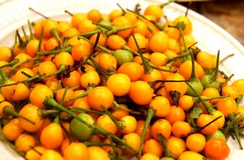 Aji Charapita Chilli Seeds Image by CHILLIESontheWEB