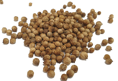 Organic Coriander Seeds Image by SPICESontheWEB