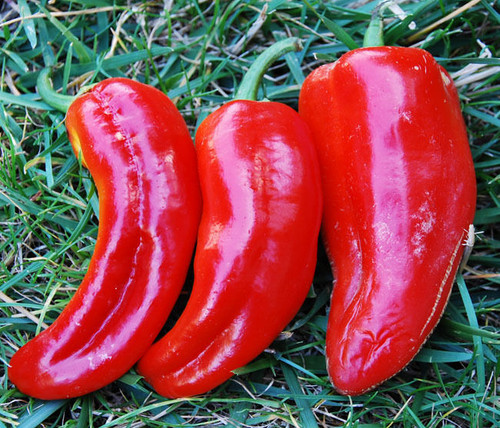 Marconi Red Sweet Pepper Image by CHILLIESontheWEB