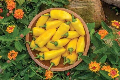 Lemon Dream Sweet Pepper Image by CHILLIESontheWEB